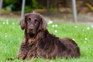 האם עדיין יש סיכוי לאלף כלב בוגר?