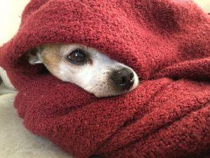 הכן את כלבך לחורף
